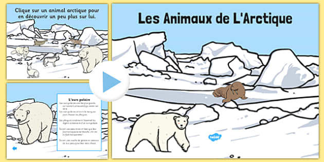 Les Animaux de L'Arctique PowerPoint French - french, winter, arctic, animals, habitat, powerpoint