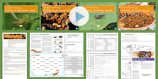 British Science Week 10th - 19th March 2017:  Insect Farming Resource Pack - British Science Week, Discoveries, Inventions, insect farming, global issues, food security, environ