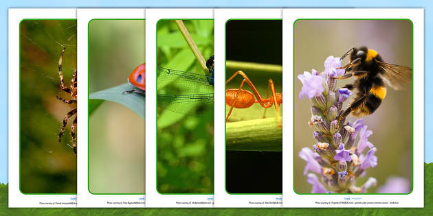 Zoomed In Minibeast A4 Photo Pack - minibeasts, display photos