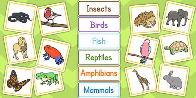 Animal Groups Sorting Cards - animal, groups, sorting, cards