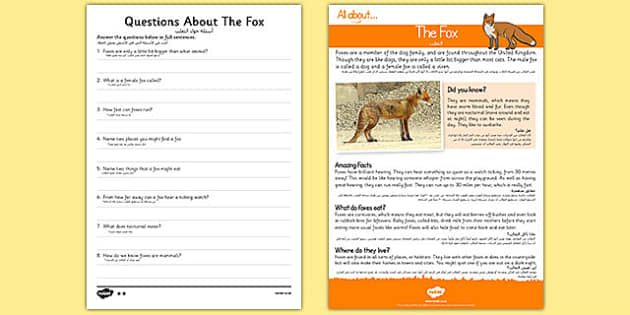 Fox Reading Comprehension Arabic Translation - arabic, Reading comprehension, fox, find, locate, read, comprehend, fact, title, fact file, information, question
