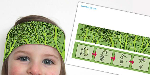 Bean Plant Life Cycle Headband - bean plant, life cycle, headband