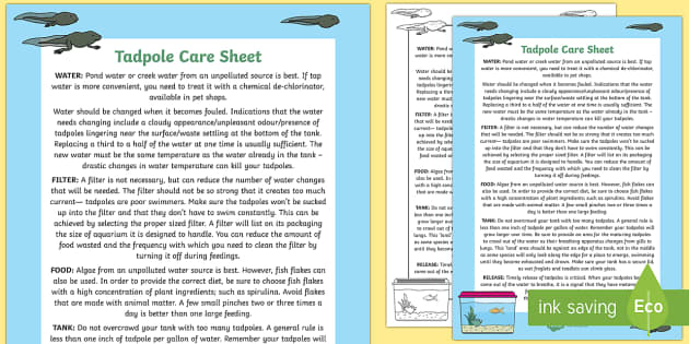 Tadpole Care Information Sheet - tadpole, care, sheet, frog, tank, caring