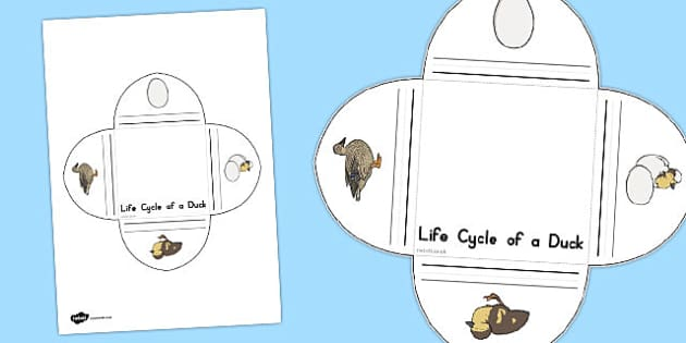 Duck Life Cycle Interactive Visual Aid - australia, life cycle