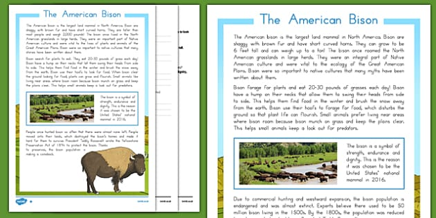 USA American Bison Information Sheets and Comprehension - usa, america, bison, reading comprehension