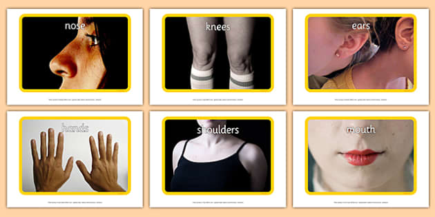 My Body Display Photos - body, human, leg, arm, pictures, images, me, myself, ourselves, people, eyes, nose, biology, names, body parts
