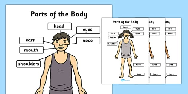 Parts of the Body (A4) - parts of the body, Eyes, nose, mouth, display, chest, tongue, ourselves, all about me, my body, senses, emotions, family, body, growth, parts od the body