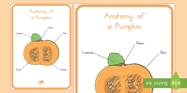 Anatomy of a Pumpkin Display Poster