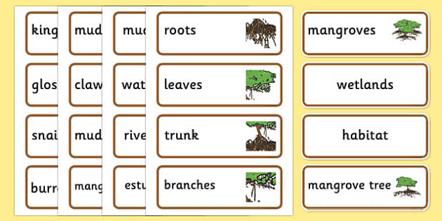Australian Mangrove Habitat Word Cards - australia, Science, Year 1, Habitats, Australian Curriculum, Mangrove, Living, Living Adventure, Good to Grow, Ready Set Grow, Life on Earth, Environment, Living Things, Animals, Plants, Word Cards