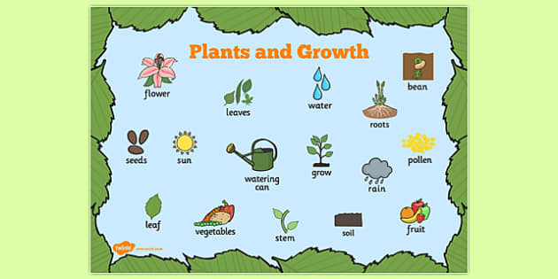 Plants and Growth Topic Word Mat - plants, growth, word mat
