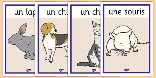 French Pets Display Posters - french, pets, display posters, display, posters