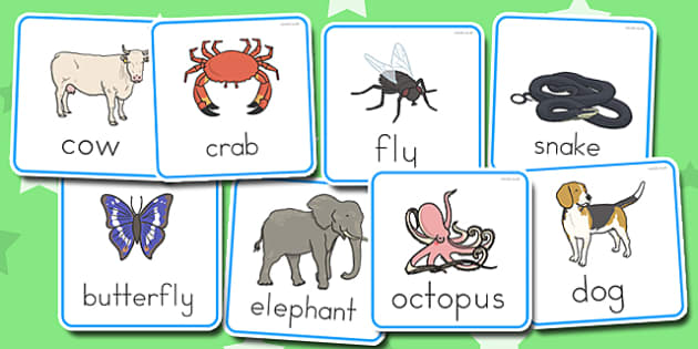 Vertebrates or Invertebrates Cards - australia, vertebrates, invertebrates