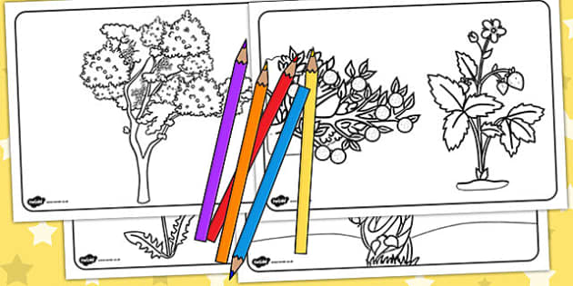 Plant Colouring Sheets - Australia, Plant, Colouring, Sheets
