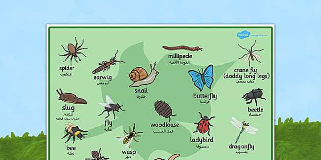 بساط كلمات عن المخلوقات الصغيرة إنجليزي عربي