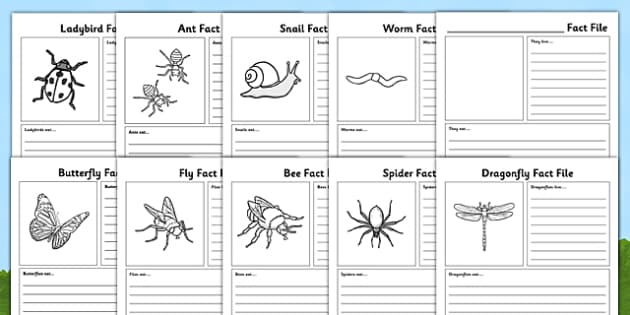 Minibeasts Fact File Sheets - minibeasts, fact file, sheets, fact, file
