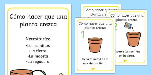 Pósters de cómo crecer una planta - plantas, flores, crecimiento, proceso, semilla, maceta