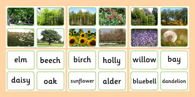 Nature Tree Photo Matching Cards - nature, tree, photo matching cards, matching, cards, match, photo