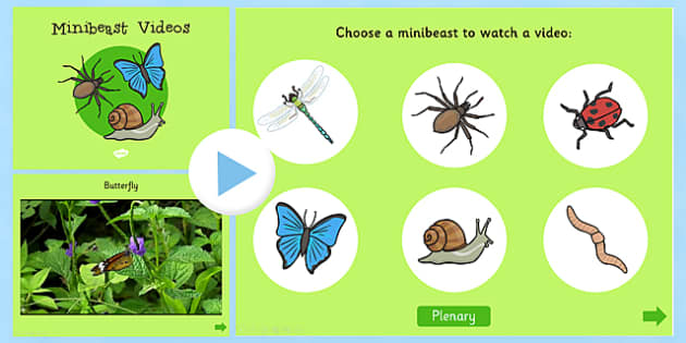 Minibeasts Videos PowerPoint - minibeasts, powerpoint, insects