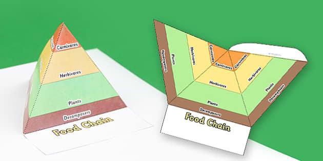 Food Chain Pyramids Foldable Visual Aid Template - food chain