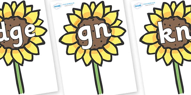 Silent Letters on Sunflowers - Silent Letters, silent letter, letter blend, consonant, consonants, digraph, trigraph, A-Z letters, literacy, alphabet, letters, alternative sounds