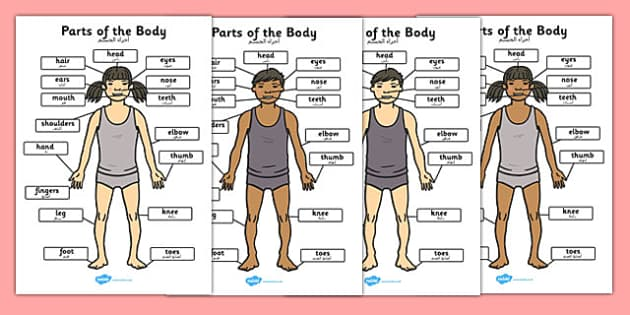 Parts of the Body A4 Arabic - arabic, parts, body, a4, parts of the body
