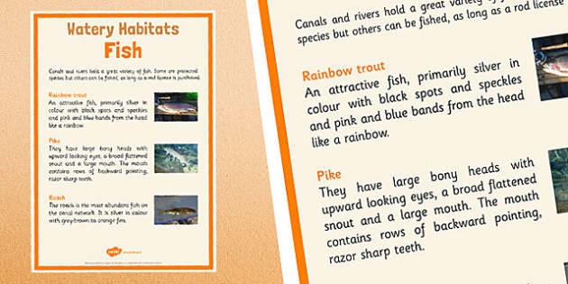 Canal Habitats Fish Display Poster - canal habitats, display poster, fish