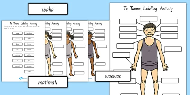 Body Parts Labelling Activity Te Reo Māori - nz, new zealand, literacy, writing, words, colouring, body, me, myself, science, ourselves, words