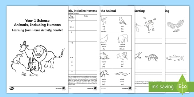 Year 1 Science Learning from Home (Animals, Including Humans) Activity Booklet - Key Stage 1, home learning, homework, Y1, KS1