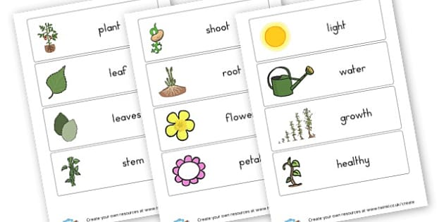 Plant Vocabulary - Plants & Growth Primary Resources, flowers, grow, planting, garden