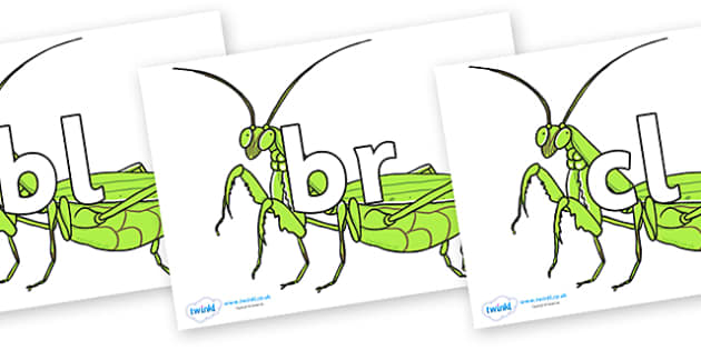 Initial Letter Blends on Praying Mantis - Initial Letters, initial letter, letter blend, letter blends, consonant, consonants, digraph, trigraph, literacy, alphabet, letters, foundation stage literacy