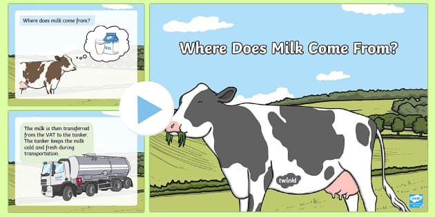 Where Does Milk Come From? PowerPoint - Sustainability, cows, dairy farmers, milk, Australia