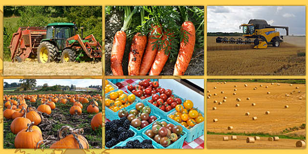 Harvest Photo Clip Art Pack - harvest, photo, pack, autumn, art