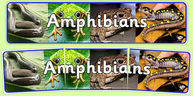 Amphibians Photo Display Banner - amphibians, display banner, photo, display, banner