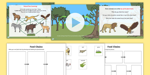 Living Things and their Habitats Food Chains Lesson Teaching Pack
