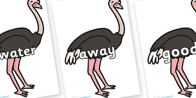Next 200 Common Words on Ostriches - Next 200 Common Words on  - DfES Letters and Sounds, Letters and Sounds, Letters and sounds words, Common words, 200 common words