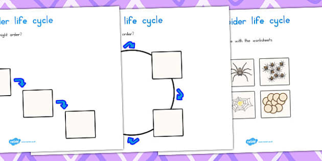 Spider Life Cycle Worksheets - life cycles, lifecycle, minibeasts