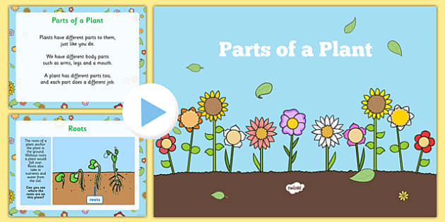 EYFS Parts of a Plant PowerPoint - UTW, the world, planting and growing, plants and growth