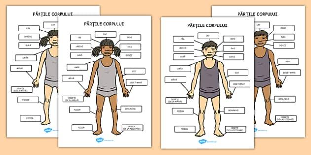 Părțile corpului uman - Planșe A4