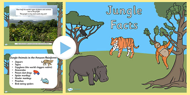 EYFS Jungle Facts PowerPoint - discussions, animals, rainforest