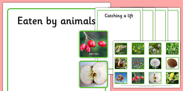 Photo Seed Dispersal Sorting Activity - photo, seed dispersal, sorting, activity, display