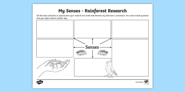 My Senses Rainforest Research Map Template - rainforest, map