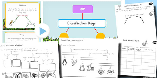 Year 3 Classification Keys PowerPoint Differentiated Lesson Teaching Pack