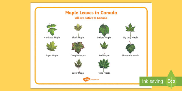 Maple Leaves in Canada Word Mat