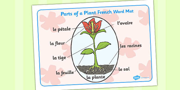 Parts of a Plant Word Mat French - words, visual, aid, France