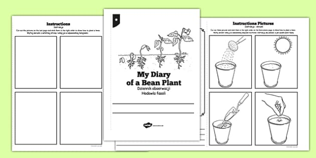 My Diary of a Bean Plant Polish Translation - polish, Bean, growth, plant, life cycle, lifecycle, diary, workbook, worksheet, plant growth, beans, garden, Topic, Foundation stage, knowledge and understanding of the world, investigation