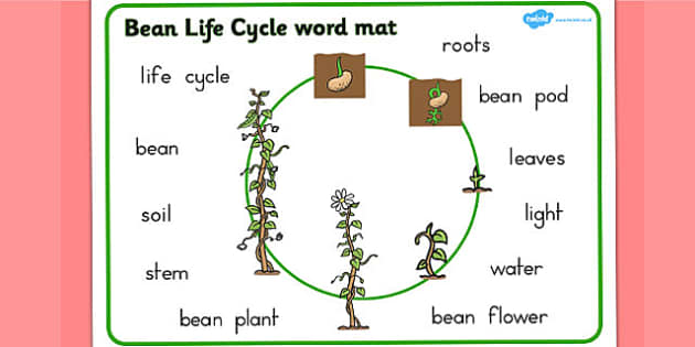 Bean Growth Word Mat - Australia, Bean, Growth, Growing, Word
