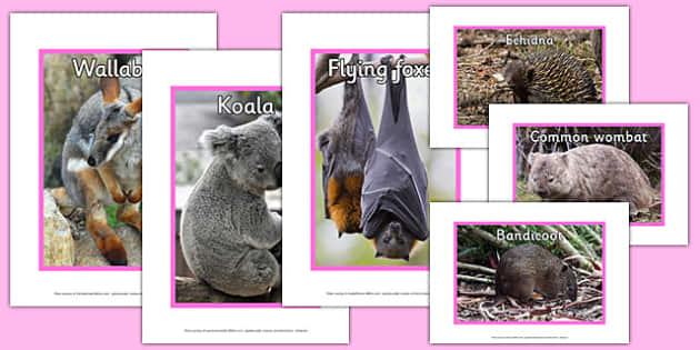 Australian Mammals Display Photos - australia, mammals, display photos, animals