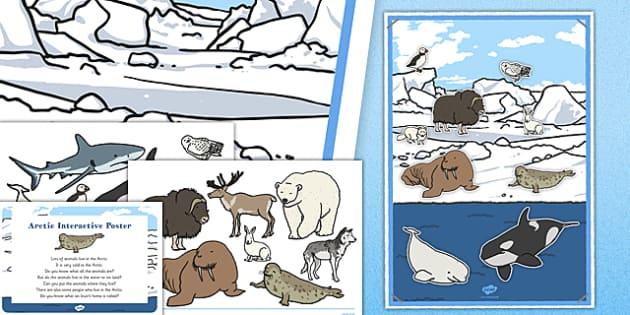 Arctic Sort EYFS Interactive Poster Plan and Resource Pack - winter, arctic, Antarctic, polar