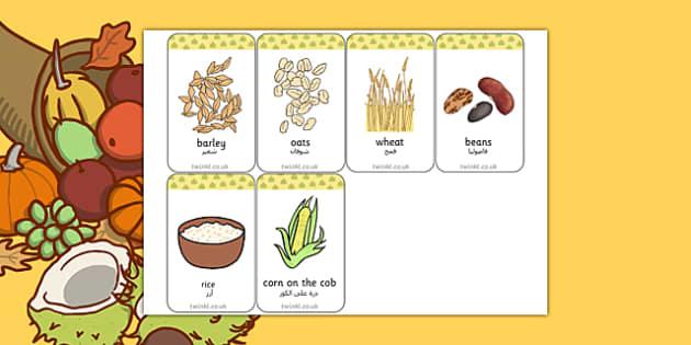 Harvest Grains Flash Cards Arabic Translation - arabic, harvest, grain