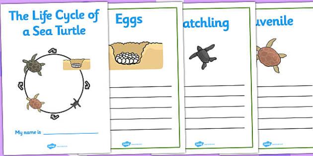 Sea Turtle Life Cycle Workbook (Under the Sea) - life cycle of a sea turtle, workbook, life cycle workbook, work book, sea turtle workbook, turtle life cycle, sea turtle